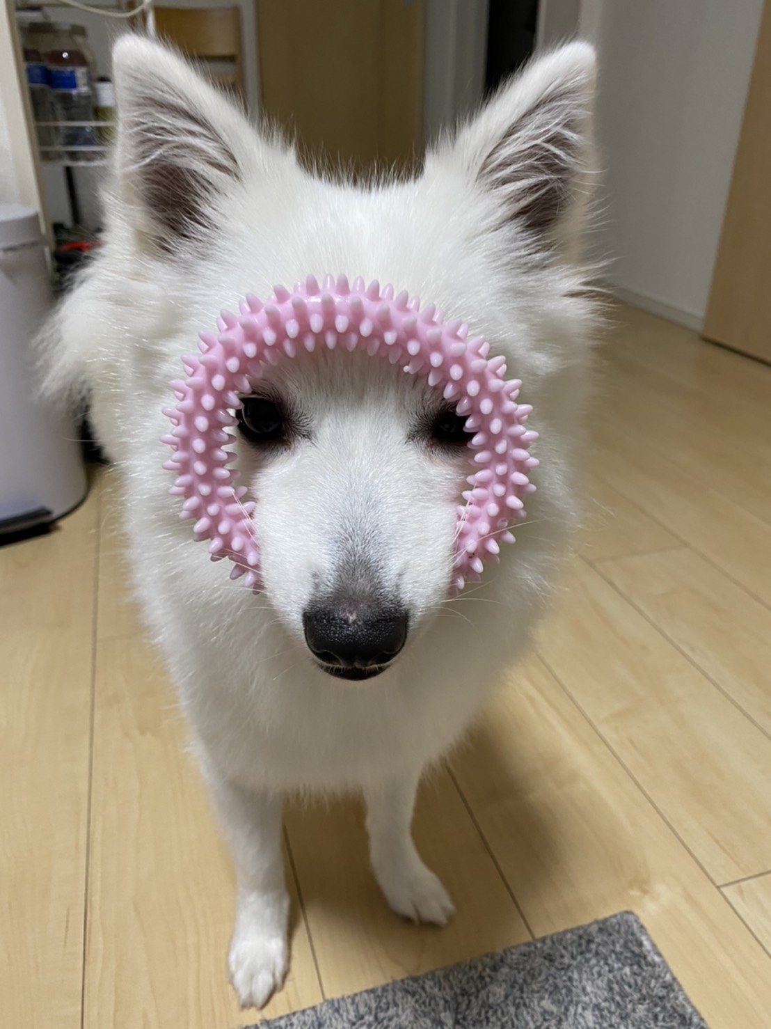愛犬デイジーちゃん